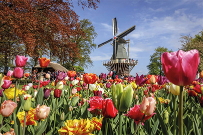 Keukenhof Windmill shot with in front flowers