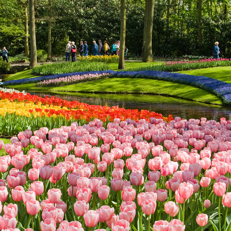 Keukenhof Admission Only + 1h. Amsterdam Canal Cruise