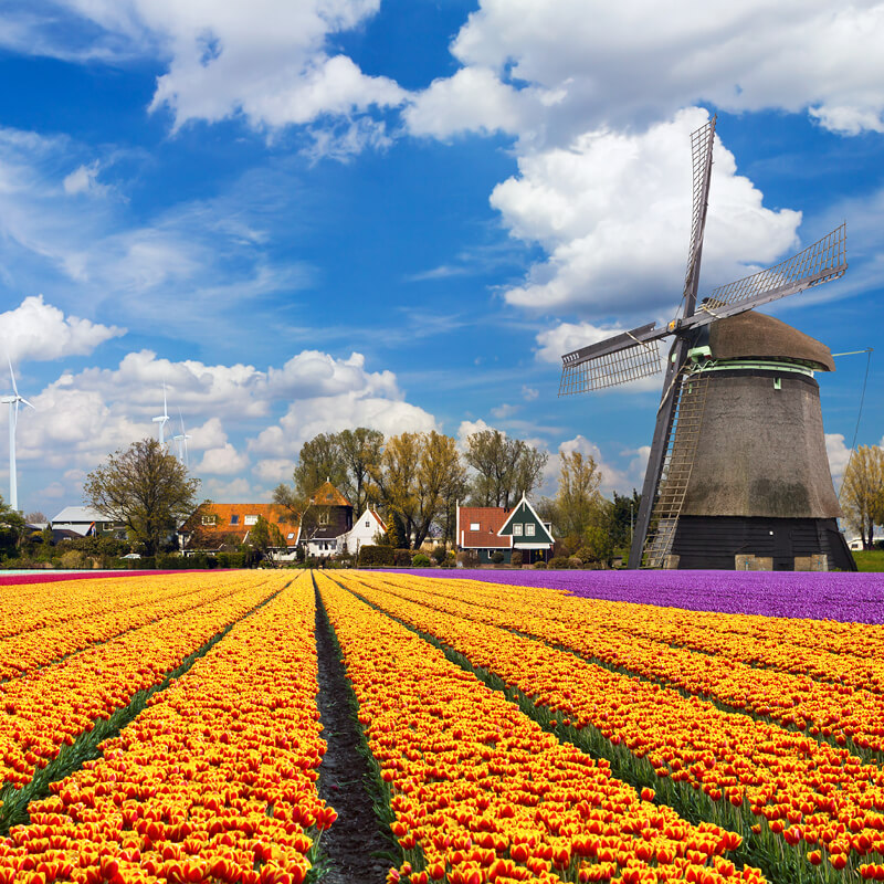 Keukenhof, flower fields and Bulb Farm