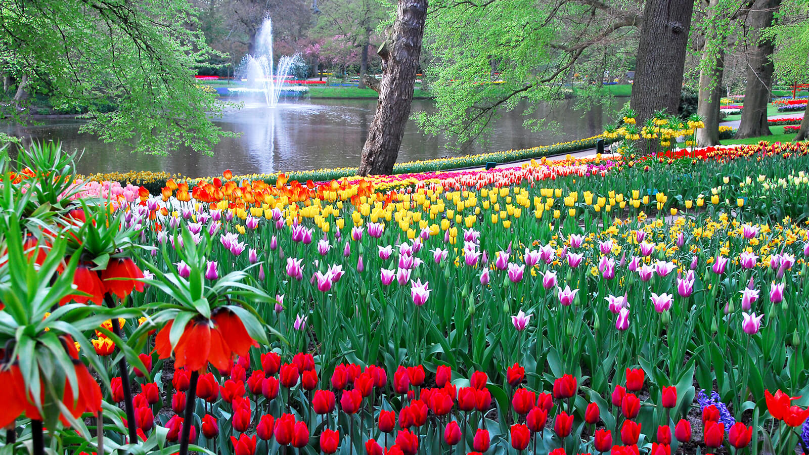 Tours Of Holland Tulips